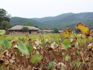 South Chungcheong Province traditional alcohol tour
